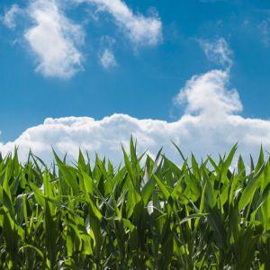 Emissies landbouwgrond volgens BIJ12
